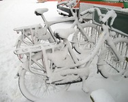 witte fietsen 2