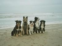 Hondenvrienden